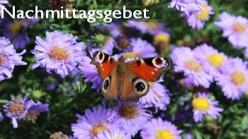 Schmetterling auf Astern, Copyright:AW